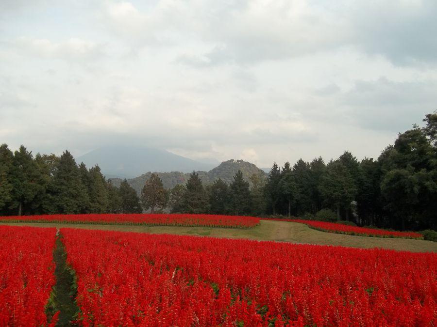 Ботанический сад под горой Дайсэн © фото Алеф